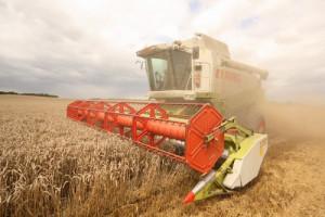 Rusko se tedy v posledních letech stalo světovým vývozcem obilí