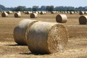 žádná jiná země neexportovala tolik obilí jako Rusko